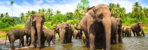 The Best Elephant Trekking on Koh Chang